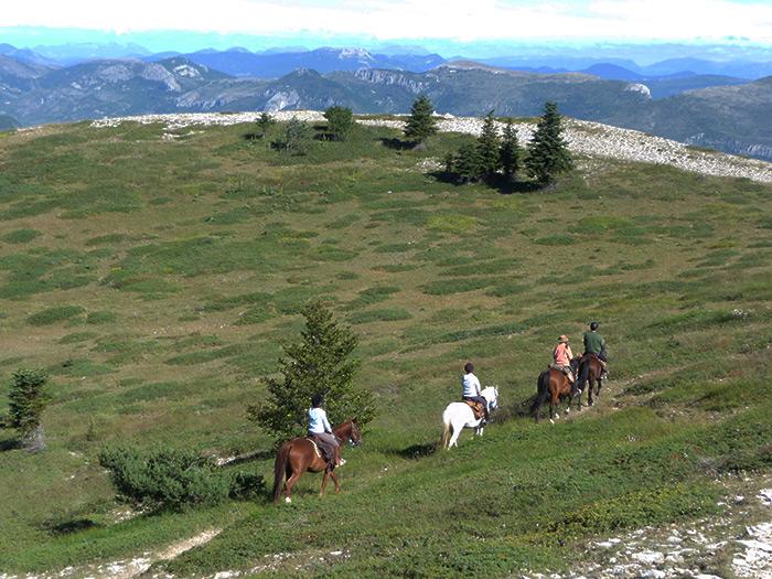 Crêtes de la montagne de Lure (alt 1400 m )